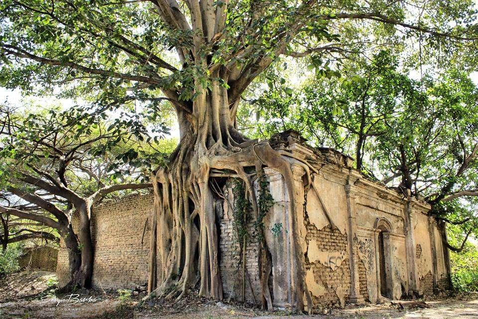 La casa rbol en tepic sorprendente escondida y - Casas de madera en arboles ...
