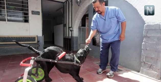 Da una segunda oportunidad a animales con fracturas